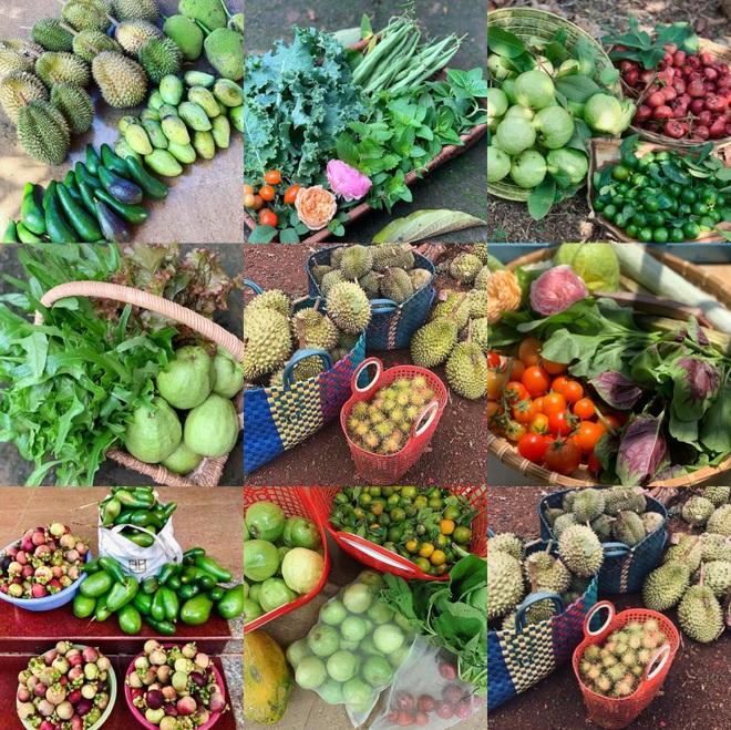 Vườn sai trĩu quả của 9X Bình Phước bỏ phố về quê nối nghiệp cha - 2