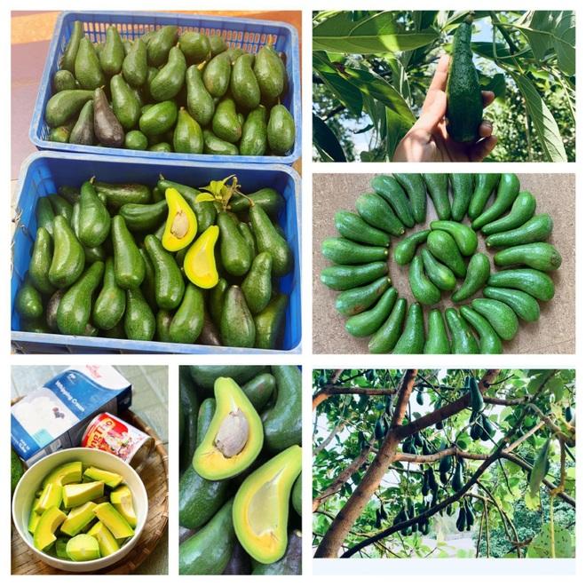 Vườn sai trĩu quả của 9X Bình Phước bỏ phố về quê nối nghiệp cha - 3
