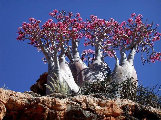 Kỳ hoa dị thảo ở quần đảo lạ lùng nhất thế giới - 2