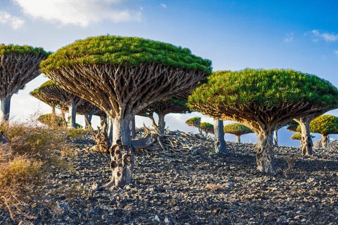 Kỳ hoa dị thảo ở quần đảo lạ lùng nhất thế giới - 1