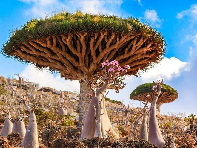 Kỳ hoa dị thảo ở quần đảo lạ lùng nhất thế giới - 3