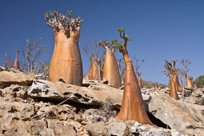 Kỳ hoa dị thảo ở quần đảo lạ lùng nhất thế giới - 4