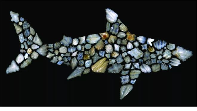 Cá mập từng suýt bị tuyệt chủng 19 triệu năm trước - 2