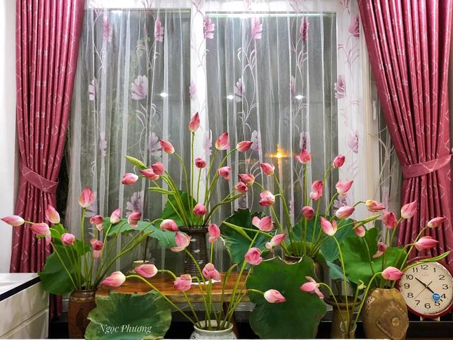 Yêu thích hương hoa mùa hạ, cô giáo Hà Nội mang cả đầm sen vào nhà - 4