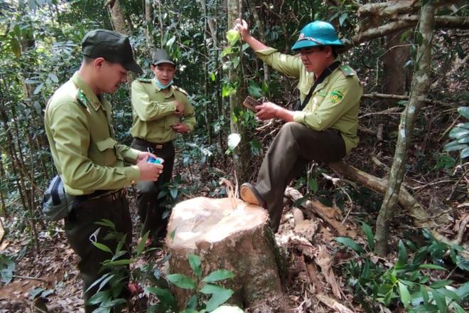 Phá rừng ở Gia Lai: Giao công an điều tra, đủ yếu tố sẽ xử lý hình sự - 2