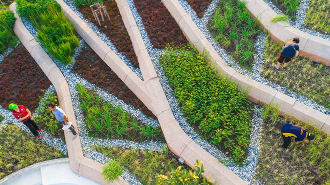 Kinh ngạc ruộng lúa kiểu bậc thang trên mái nhà ngập tràn màu xanh - 8