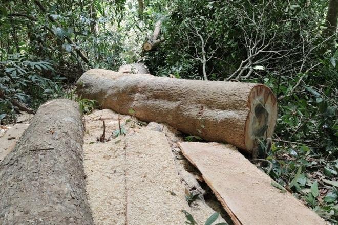 Phá rừng ở Gia Lai: Giao công an điều tra, đủ yếu tố sẽ xử lý hình sự - 3