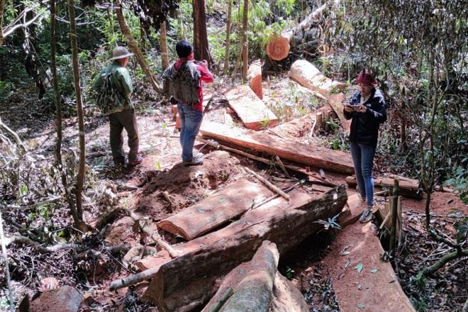 Phá rừng ở Gia Lai: Giao công an điều tra, đủ yếu tố sẽ xử lý hình sự - 5
