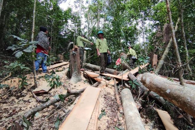 Phá rừng ở Gia Lai: Giao công an điều tra, đủ yếu tố sẽ xử lý hình sự - 6
