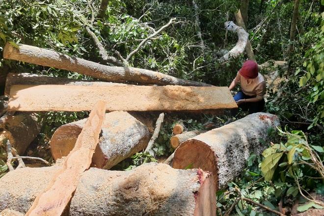 Phá rừng ở Gia Lai: Giao công an điều tra, đủ yếu tố sẽ xử lý hình sự - 7