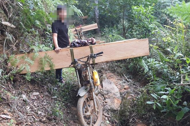 Phá rừng ở Gia Lai: Giao công an điều tra, đủ yếu tố sẽ xử lý hình sự - 8