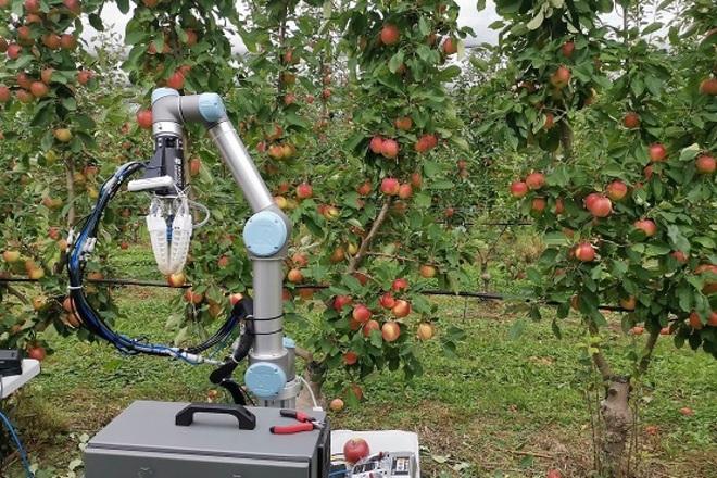 Tròn mắt với robot làm việc bất kể nắng mưa, hái táo chỉ 7 giây - 3