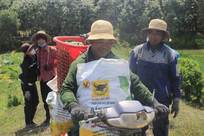 Trồng sen kết hợp nuôi cá, nông dân thu lãi 200 triệu đồng mỗi vụ - 3