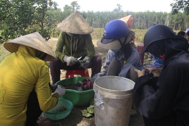 Trồng sen kết hợp nuôi cá, nông dân thu lãi 200 triệu đồng mỗi vụ - 7
