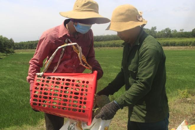 Trồng sen kết hợp nuôi cá, nông dân thu lãi 200 triệu đồng mỗi vụ - 8
