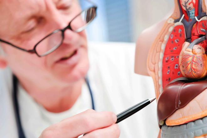 Cách hạ men gan phổ biến, hiệu quả và an toàn nhất - 1