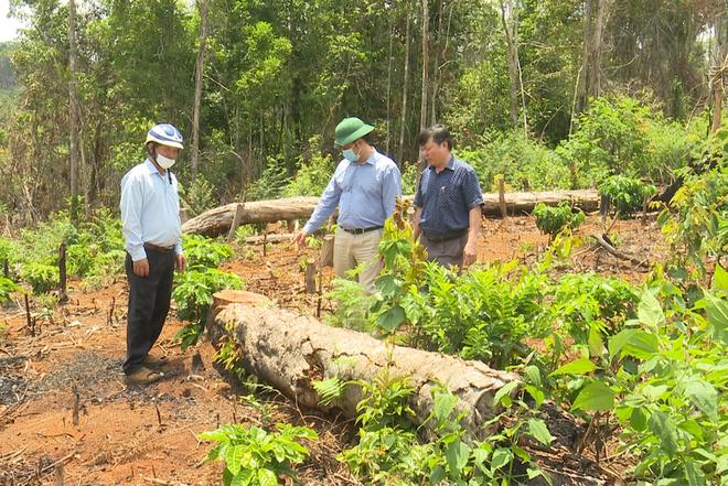 Phó Chủ tịch UBND tỉnh Đắk Nông chỉ đạo xử lý nghiêm vụ phá rừng - 1