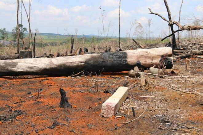 Phó Chủ tịch UBND tỉnh Đắk Nông chỉ đạo xử lý nghiêm vụ phá rừng - 2