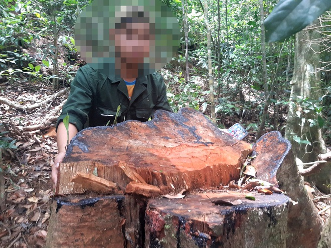 Tàn sát rừng xanh ở Gia Lai: Kiểm tra một nơi, báo cáo một nẻo (!?) - 1