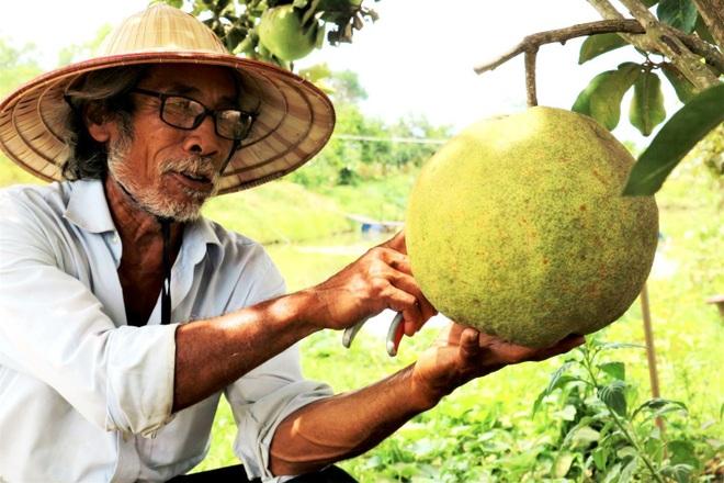 Lão nông bắt cây ra quả trên đất cằn, thu hàng trăm triệu đồng mỗi năm - 4