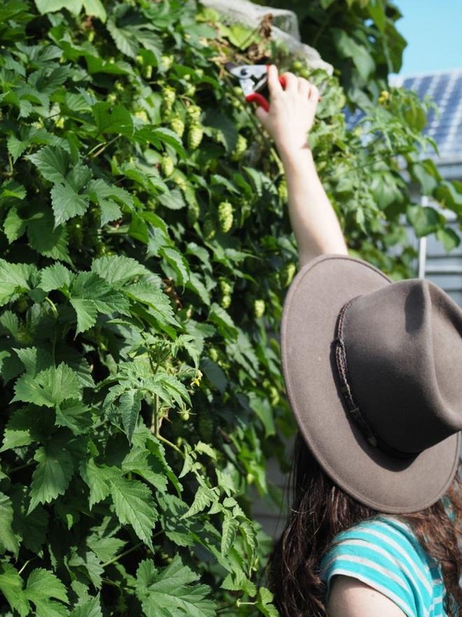 Bí quyết hay của cô gái trẻ sở hữu vườn 30m2 nhưng thu hoạch không xuể - 3