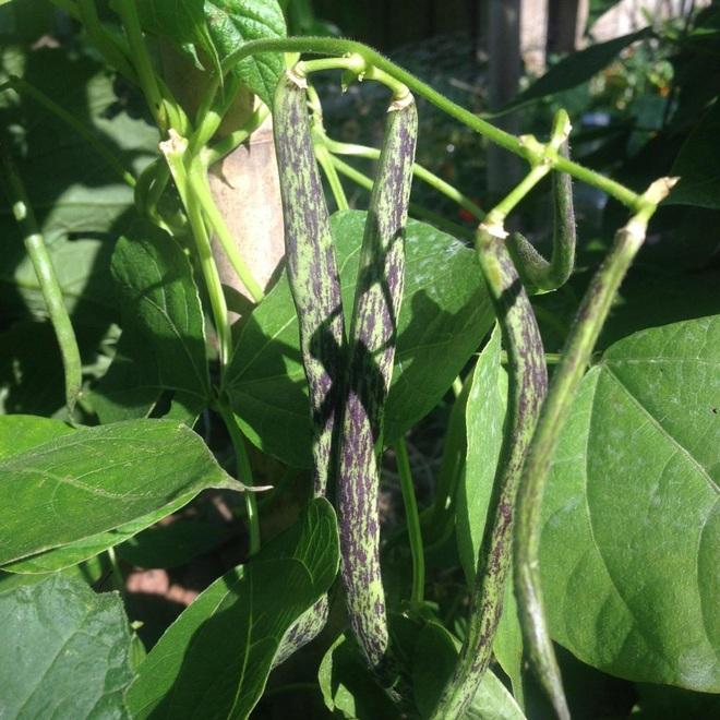 Bí quyết hay của cô gái trẻ sở hữu vườn 30m2 nhưng thu hoạch không xuể - 4