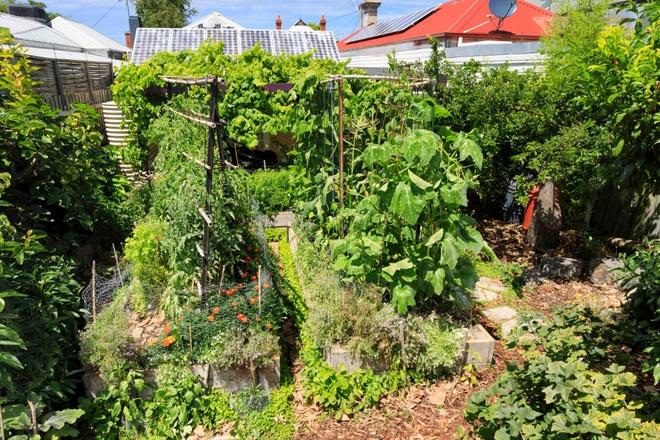 Bí quyết hay của cô gái trẻ sở hữu vườn 30m2 nhưng thu hoạch không xuể - 6