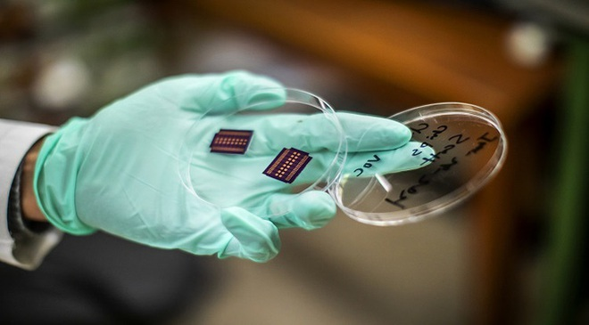 Mũi điện tử có thể đánh hơi chính xác tới 95% các loại ung thư khó phát hiện - 1