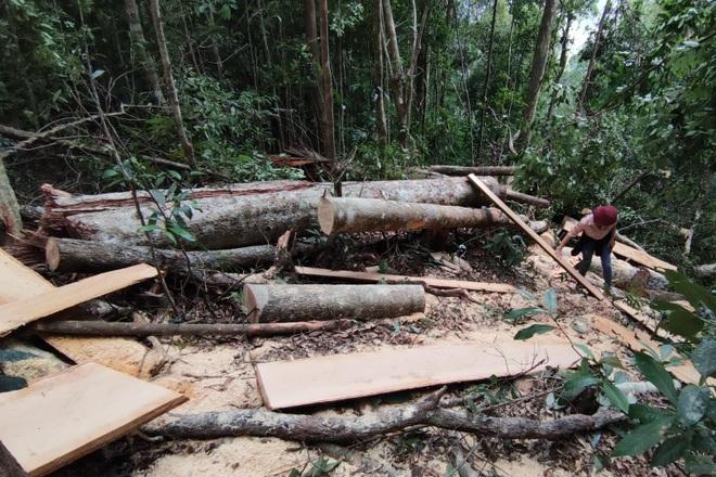Tàn sát rừng xanh ở Gia Lai: Kiểm tra một nơi, báo cáo một nẻo (!?) - 4