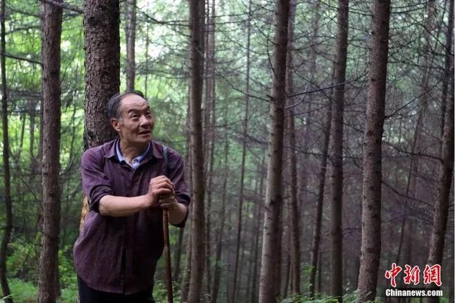 Người đàn ông một chân dành hơn 34 năm leo núi trồng rừng - 1