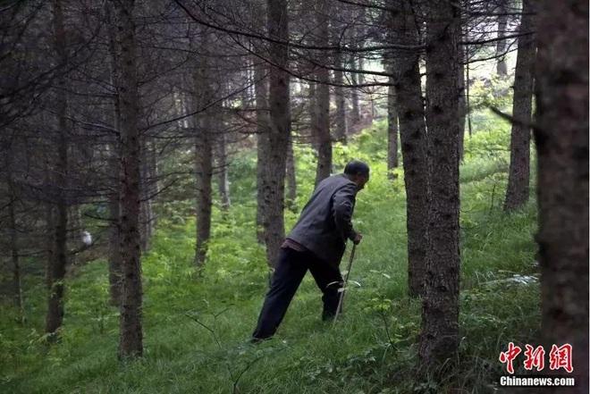 Người đàn ông một chân dành hơn 34 năm leo núi trồng rừng - 2