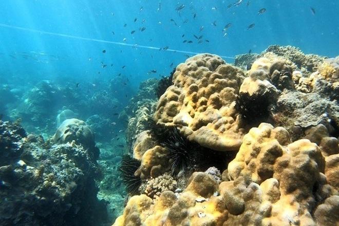 Thả, đặt phao tiêu bảo vệ 4 khu vực biển vịnh Quy Nhơn - 3