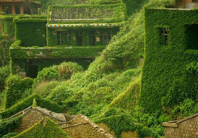 Cây xanh nuốt chửng làng ma nổi tiếng Trung Quốc - 2