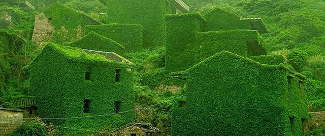 Cây xanh nuốt chửng làng ma nổi tiếng Trung Quốc - 3
