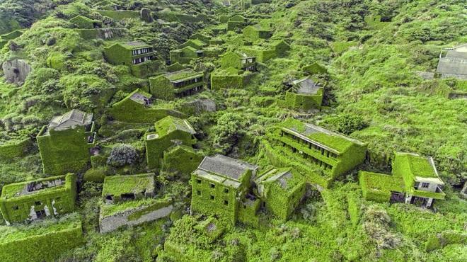 Cây xanh nuốt chửng làng ma nổi tiếng Trung Quốc - 1