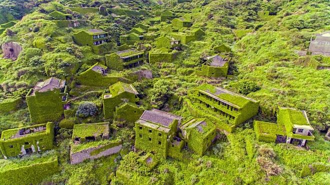 Cây xanh nuốt chửng làng ma nổi tiếng Trung Quốc - 5