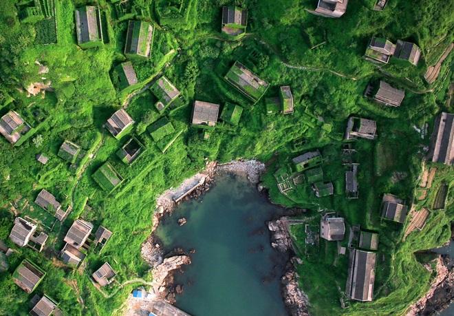 Cây xanh nuốt chửng làng ma nổi tiếng Trung Quốc - 6