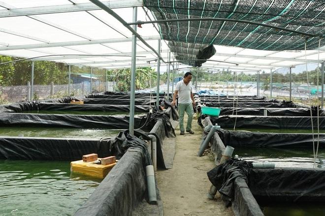 Cất bằng đại học đi nuôi cá chạch lấu, kỹ sư đút túi gần 2 tỷ đồng/năm - 3