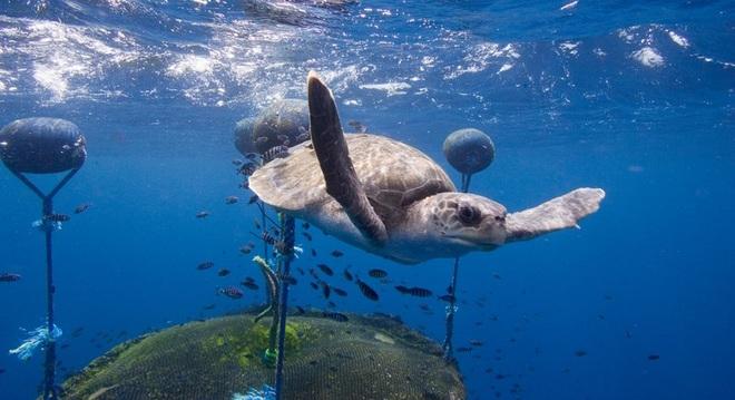 Bạn biết gì về đại dương, trái tim duy trì sự sống vạn vật trên Trái đất? - 2