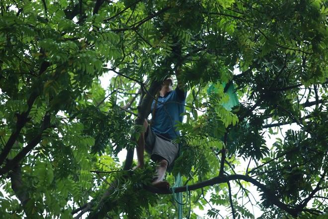 Bất chấp nguy hiểm, sấu thủ đu dây trên ngọn cây hái quả - 3