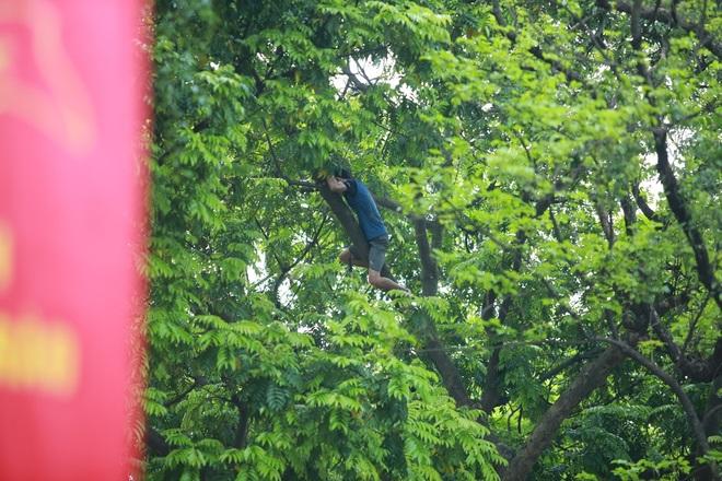 Bất chấp nguy hiểm, sấu thủ đu dây trên ngọn cây hái quả - 1