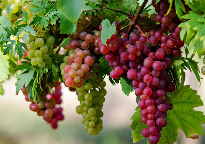 6 loại trái cây bán đầy chợ cực tốt cho người bị xơ gan - 5