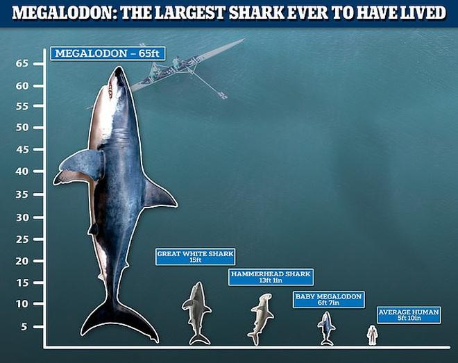 Quái vật tiền sử dài gần 20 mét: Nỗi khiếp sợ cho mọi giống loài dưới nước - 3