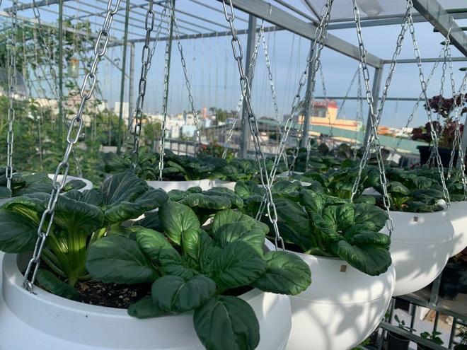 Khu vườn trên cao, rộng 60m2 có nhiều rau, trái lạ của mẹ đảm ở Sài Gòn - 1
