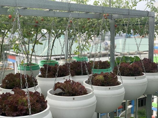 Khu vườn trên cao, rộng 60m2 có nhiều rau, trái lạ của mẹ đảm ở Sài Gòn - 4