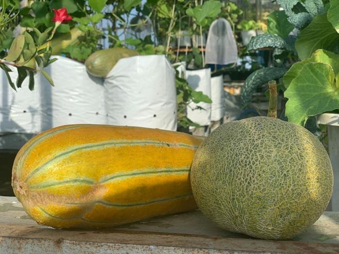 Khu vườn trên cao, rộng 60m2 có nhiều rau, trái lạ của mẹ đảm ở Sài Gòn - 8