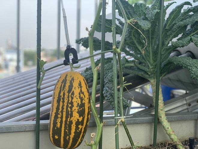 Khu vườn trên cao, rộng 60m2 có nhiều rau, trái lạ của mẹ đảm ở Sài Gòn - 9