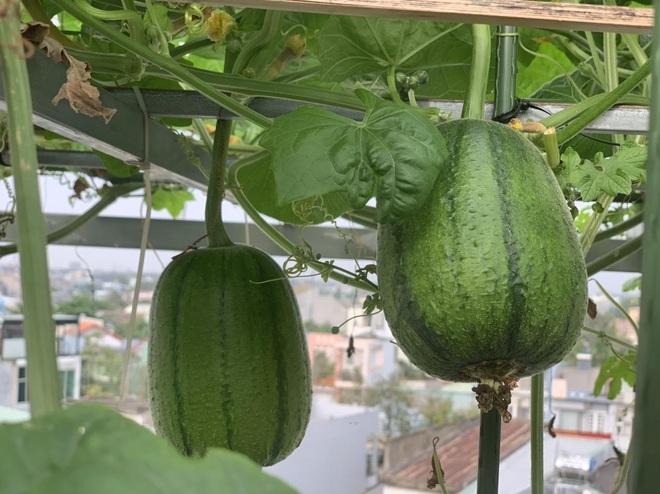 Khu vườn trên cao, rộng 60m2 có nhiều rau, trái lạ của mẹ đảm ở Sài Gòn - 12