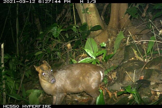 Phát hiện nhiều động vật hoang dã hiếm thấy ở Thừa Thiên Huế - 1