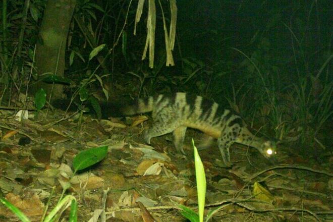 Phát hiện nhiều động vật hoang dã hiếm thấy ở Thừa Thiên Huế - 2